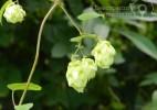 Cascada Moceriş – tărâmul zânelor (18)