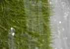 Cascada Moceriş – tărâmul zânelor (8)