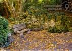 Parcul Dendrologic Simeria – comoara ascunsa din Transilvania (1)