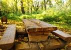 Parcul Dendrologic Simeria – comoara ascunsa din Transilvania (11)