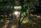 Parcul Dendrologic Simeria – comoara ascunsa din Transilvania (13)
