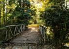 Parcul Dendrologic Simeria – comoara ascunsa din Transilvania (14)