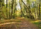 Parcul Dendrologic Simeria – comoara ascunsa din Transilvania (15)
