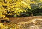 Parcul Dendrologic Simeria – comoara ascunsa din Transilvania (17)
