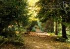 Parcul Dendrologic Simeria – comoara ascunsa din Transilvania (18)