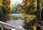 Parcul Dendrologic Simeria – comoara ascunsa din Transilvania (20)