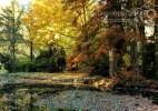 Parcul Dendrologic Simeria – comoara ascunsa din Transilvania (22)