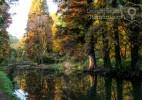 Parcul Dendrologic Simeria – comoara ascunsa din Transilvania (24)