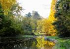 Parcul Dendrologic Simeria – comoara ascunsa din Transilvania (5)