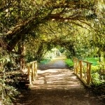 Parcul Dendrologic Simeria – comoara ascunsa din Transilvania