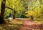 Parcul Dendrologic Simeria – comoara ascunsa din Transilvania (7)