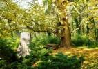 Parcul Dendrologic Simeria – comoara ascunsa din Transilvania (8)