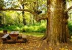 Parcul Dendrologic Simeria – comoara ascunsa din Transilvania (9)