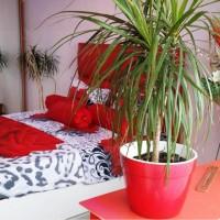 David Studio Accommodation din Bucuresti
