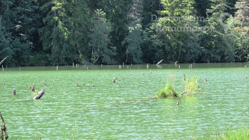 Lacul Roșu - plimbare printre rățuște