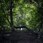Pădurea Baciu – poarta către altă lume