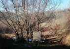 Valea Poienii- satul uitat și de sătenii (10)