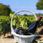 Turismul viticol românesc începe să își scrie povestea