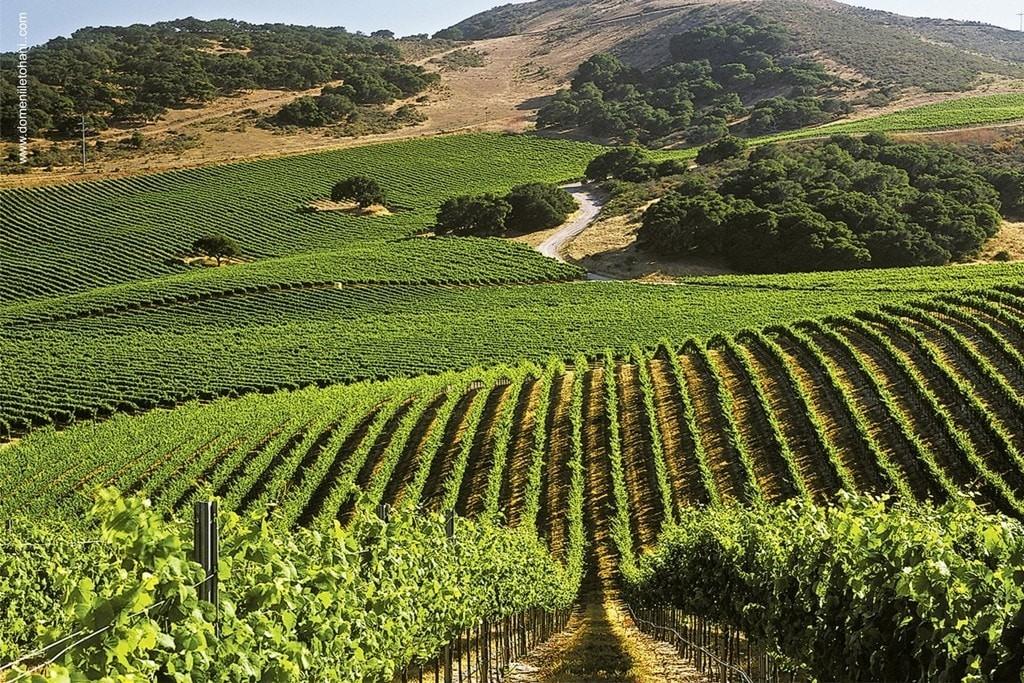 Turismul viticol românesc începe să își scrie povestea - Tohani