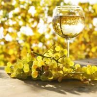 Vinul alb – gamă sortimentară