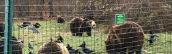 Sanctuarul urșilor bruni – Libearty 2