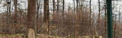 Sanctuarul urșilor bruni – Libearty