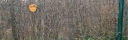 Sanctuarul urșilor bruni – Libearty 3