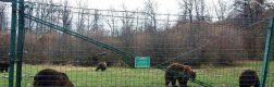 Sanctuarul urșilor bruni – Libearty 4