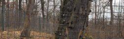 Sanctuarul urșilor bruni – Libearty 5