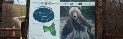 Sanctuarul urșilor bruni – Libearty 7