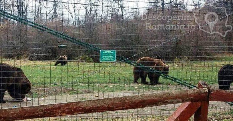 Sanctuarul urșilor bruni - Libearty