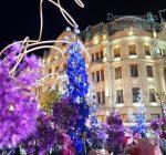 Festivalul Timfloralis – Timisoara, flori, culori, emotie – DescoperimRomania (4)