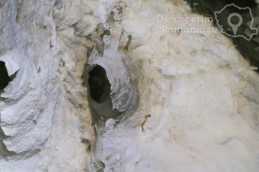Cheile oltetului si Pestra Polovragi – miracol in inima muntilor- DescoperimRomania (18)