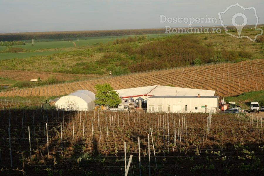 VINVEST Degustări speciale și vinuri produse la Muntele Athos – DescoperimRomania (12)